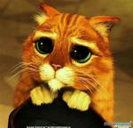 Cute big eyes.jpg