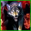 огненый волк.png